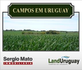 Campos à venda em Uruguay