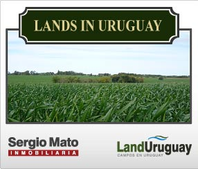 Lands for Sale Uruguay
