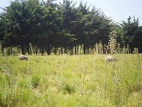 Farm for sale in Colonia, Uruguay