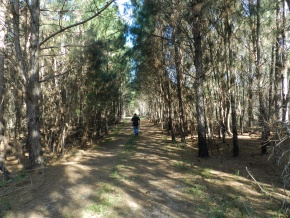 Exclusive tourist-forest land for sale, stunning countryside with several miles of the Atlantic coast and the Laguna Negra, Rocha, Uruguay