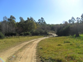 Forestry land for tourism with private beach for sale in Canelones, Uruguay