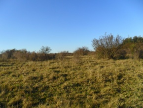 Great cattle land, for sale of 21 hectares in San Jose, border with Colonia, Uruguay