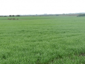 Large agricultural and livestock field for sale in Uruguay