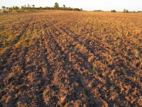 EXCELLENT 59 acre field - 100% farming able for sale in Canelones, Uruguay