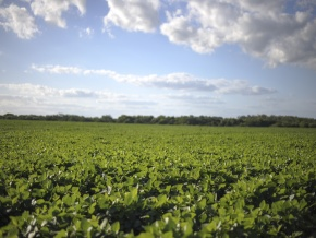 Great crop field for sale: 331 acres with coast to Rio San Juan, Colonia, Uruguay