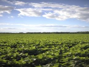 Campo agricola en venta: 134 hectareas con costa al Rio San Juan, Colonia